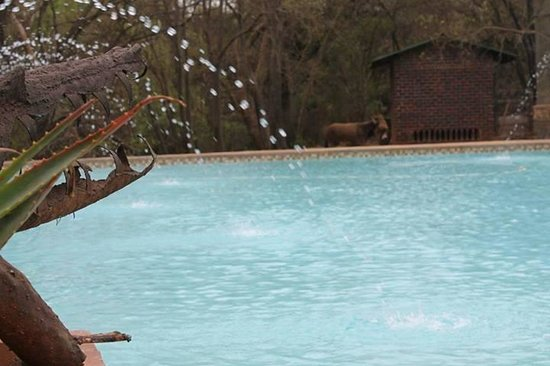 Hornbill Lodge: At The Pool