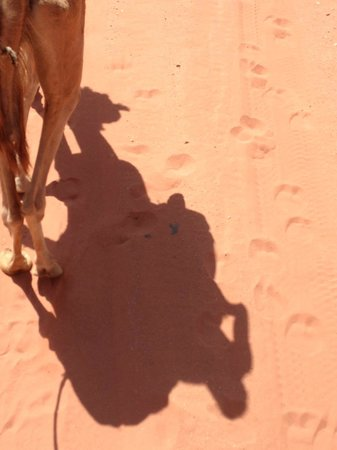 Bedouin Directions: Shadow of a Camel