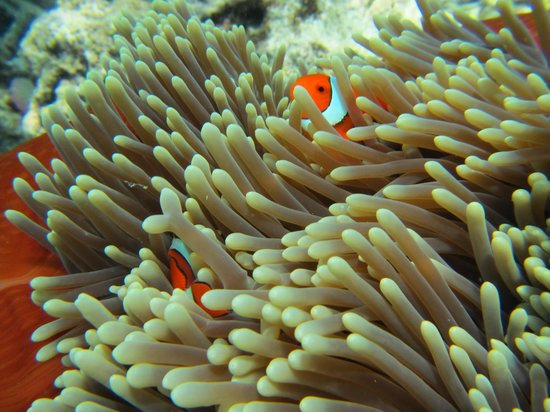 """Reef Experience : """"Finding Nemo"""""""