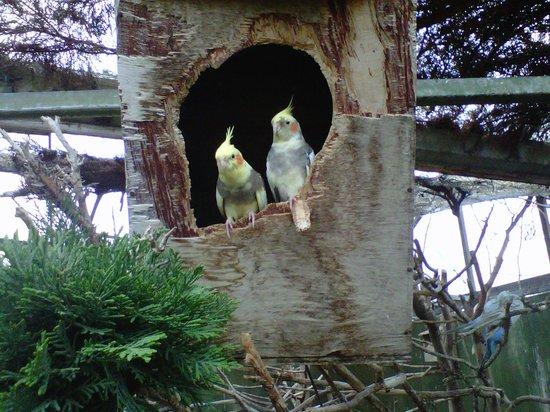 Earnley Butterflies Birds and Beasts: pair of cockatiels