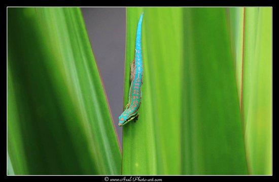 Villas Mon Plaisir : Gecko vu dans les palmiers depuis la fenetre de l'hotel