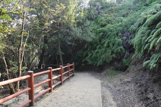 南部探照灯跡へ - Picture of Okunoshima Island, Takehara - TripAdvisor