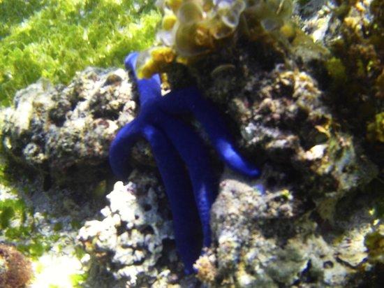 Coconuts Beach Club: Starfish