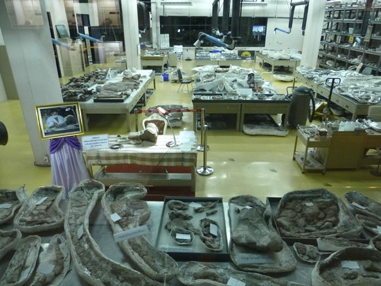 Sirindhorn Museum and Phu Kum Khao Dinosaur Excavation Site: HRH Sirindhorn's examination table in the museum lab.