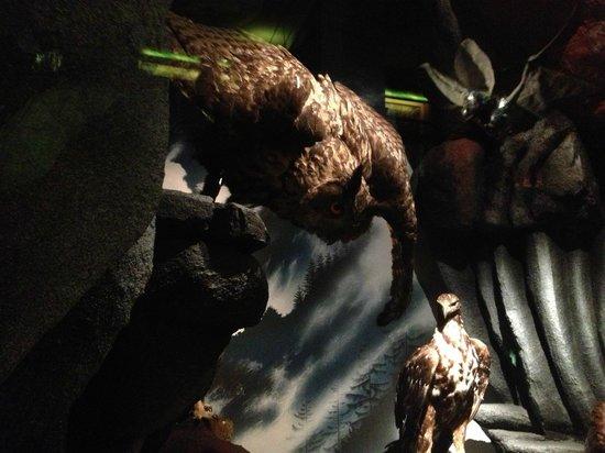 Museum d'Histoire Naturelle : Owl display