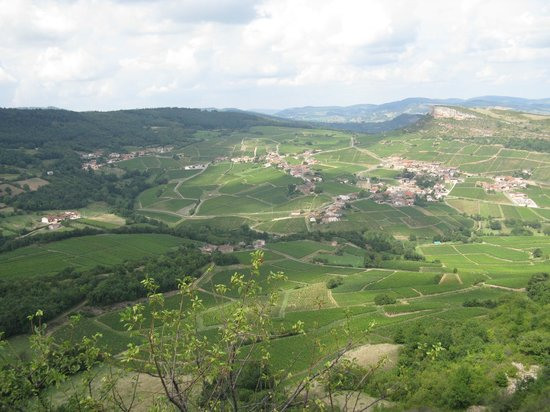 Rock of Solutré: View on the vineyards fro the cliff peak