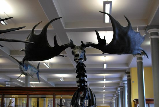 National Museum of Ireland - Natural History : Museo Nazionale irlandese - Storia Naturale