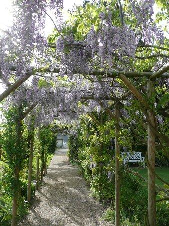Manoir de la Pigeonnerie: Wisteria Arch in May