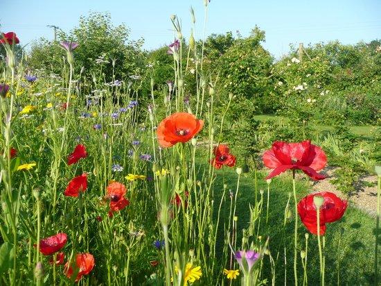 Manoir de la Pigeonnerie: Wild Flowers in the Garden