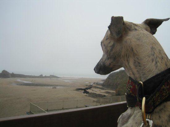 Quirky Holidays Cornwall: Beautiful Bude beach, great for dogs