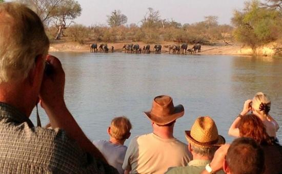 elephants at Ngepi camp