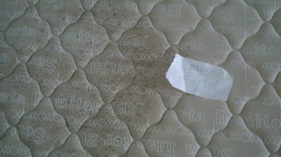 Casa Loma Inn: Black mold on mattress