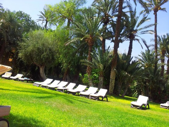 Club Med Marrakech le Riad: jardin bord de piscine