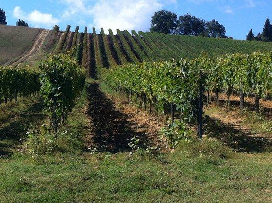 Fattoria Poggio Alloro: View of vinyard