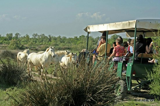 Les Marais du Vigueirat : La visite en calèche