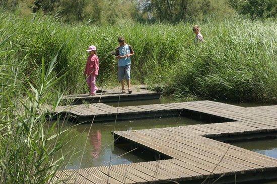 Les Marais du Vigueirat: le labyrinthe du sentier des Cabanes