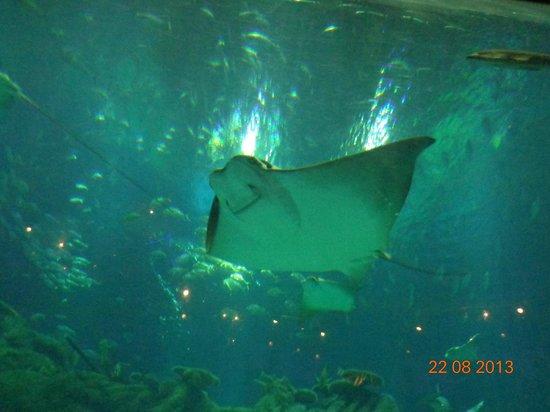 โอเชียนปาร์ค: The Grand Aquarium
