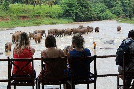 Hotel Elephant Bay: 象の水浴びを見学