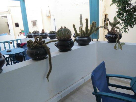 هوتل أندرياس: Piante su terrazzo