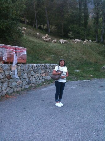 Apartamentos Alba Casa Alquesera: Salida del apartamento con las ovejas pastando
