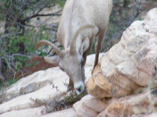 Zion Canyon Scenic Drive: three