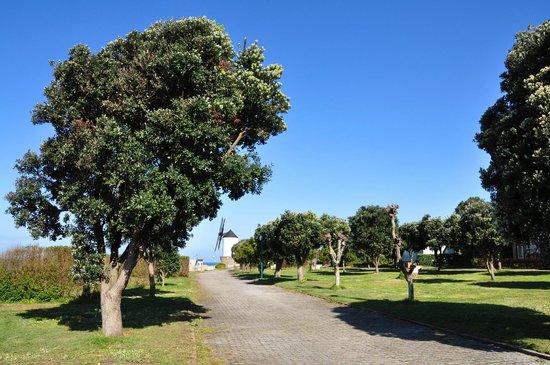 Camping 1ª O Muiño - Bungalow Park: Zona de Acampada