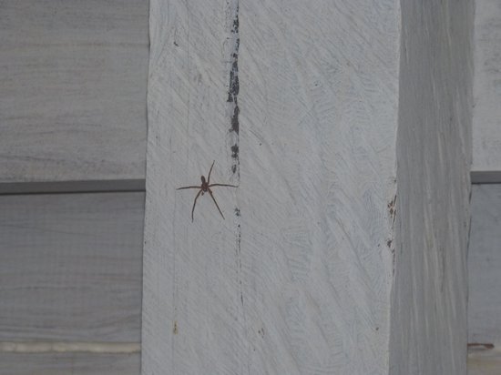 Cosmic Crab Resort: spider in the bathroom