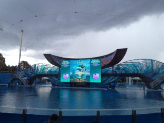 ซีเวิลด์ ออร์แลนโด: show das baleias