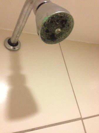 Bay Park Resort Hotel: Chuveiro mofado, sem limpeza a um bom tempo