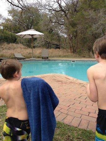 Honeyguide Khoka Moya & Mantobeni Camps: Watching the elephant approach the pool
