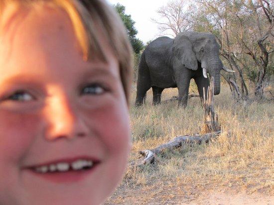 Honeyguide Khoka Moya & Mantobeni Camps: Up close and personal!