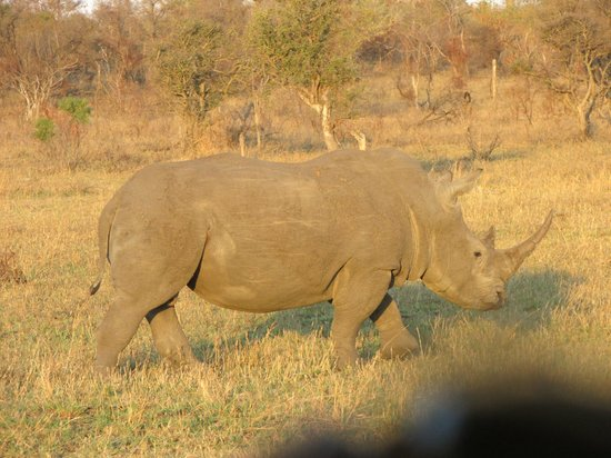 Honeyguide Khoka Moya & Mantobeni Camps: A rhino at sunset