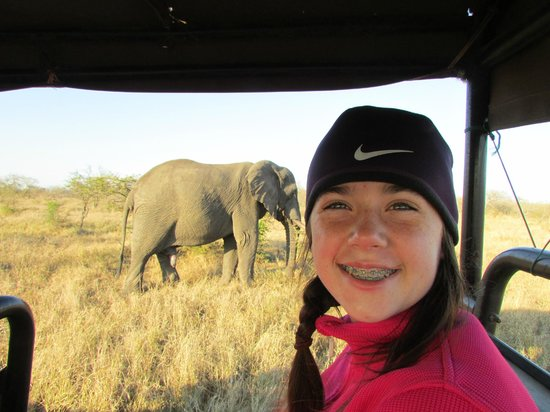 Honeyguide Khoka Moya & Mantobeni Camps: Another elephant