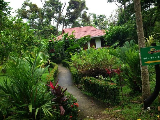 Hotel La Palapa Eco Lodge Resort : Cabina where I stayed