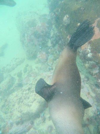 Offshore Adventures : Loving Life