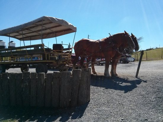 Rolling Ridge Ranch: horse cart used for the ride