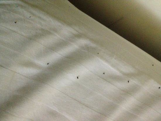 Tuong Hung Hotel: poop on the bed..yuck