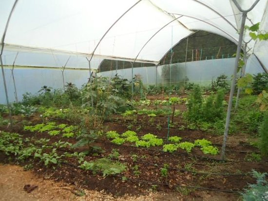 Tucanopy: Os legumes usados no restaurante são produzidos nesta horta organica