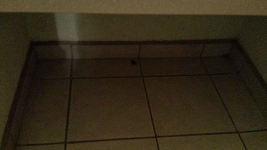 Desert Inn: A cockroach in the bathroom