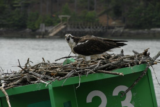 River Run Tours, Inc. : And Osprey Too!