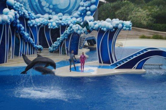 ซีเวิลด์ ออร์แลนโด: dolphins!