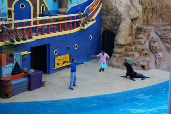 ซีเวิลด์ ออร์แลนโด: sea lion!