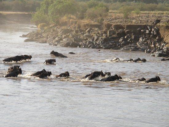 Mara Serena Safari Lodge: The crossing!!!