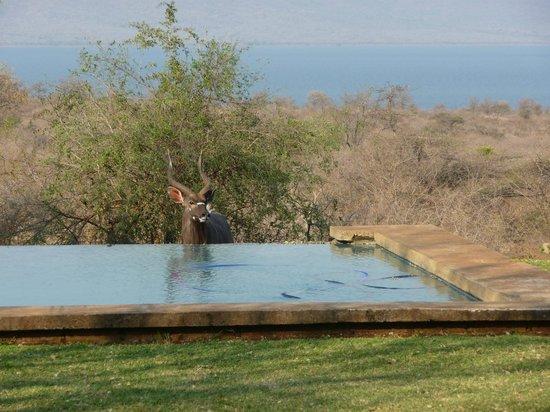 White Elephant Safari Lodge: piscina