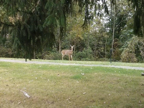 Salt Fork Lodge and Conference Center : deer