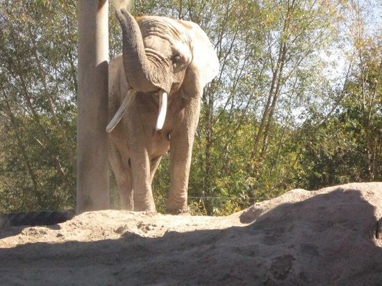 Toronto Zoo: Soon to be moving to California.