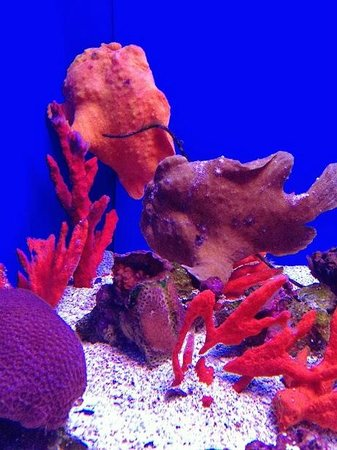 A unicorn fish picture of maui ocean center wailuku for Fish that looks like a rock