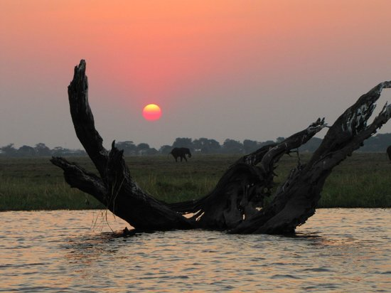 Sanctuary Chobe Chilwero : Boat Trip - Sunset on Chobe River