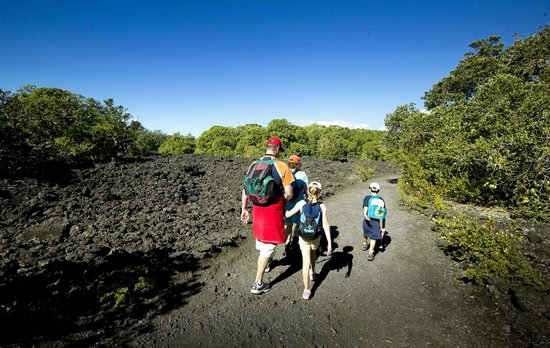 Fullers Rangitoto Volcanic Explorer Tour: Enjoy a walk through lava fields