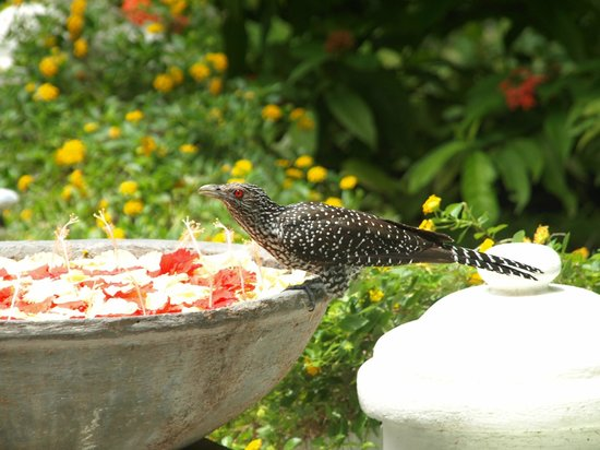 Sun Island Resort and Spa: our wellcome bird